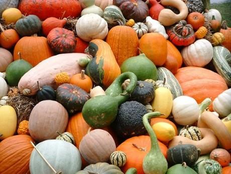 Cele mai bune legume pentru toamnă