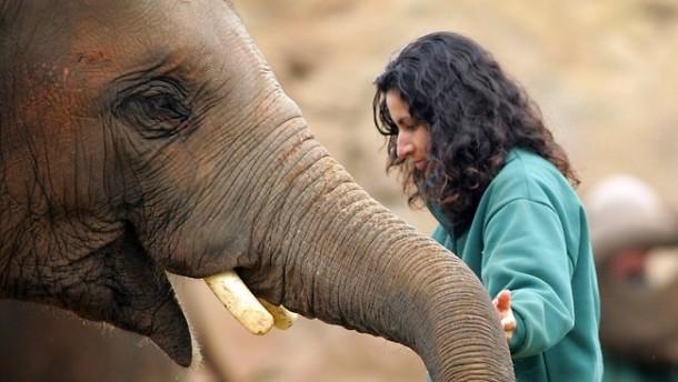 dieta puiului de elefant