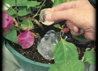 Ce se întâmplă dacă pui GHEAŢĂ în ghiveciul plantelor de apartament