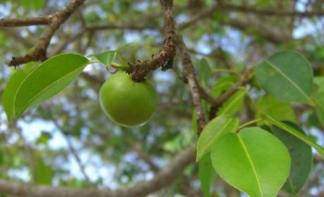 """Destinaţii de vacanţă FATALE: """"Copacul MORŢII"""" trebuie EVITAT cu orice preţ"""