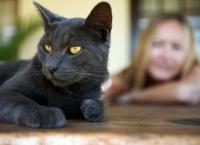Pisica te ignoră complet? O dresezi uşor dacă faci ASTA!