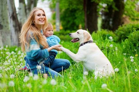 12 lucruri pe care nu le știai despre câini