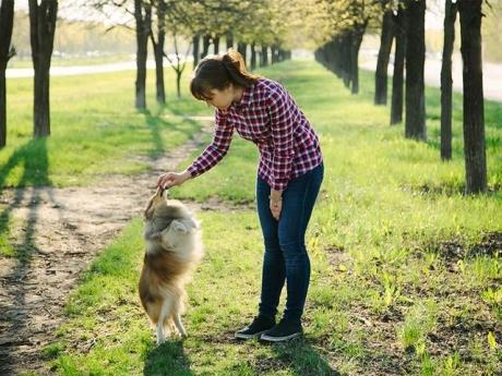 Ce se întâmplă dacă ţipi la câinele tău