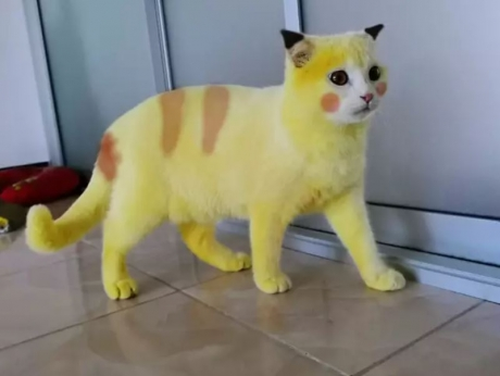 Cum a devenit pisica Pikachu virală pe internet pentru culoarea neobişnuită